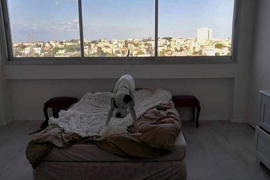 """תמונה של דירת 100 מ""""ר פינתית בקומה שביעית!"""